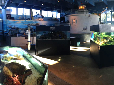 Cabrillo High School Aquarium